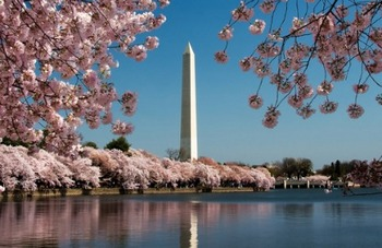 Washington-DC-Monument-cherry-blossom.jpg